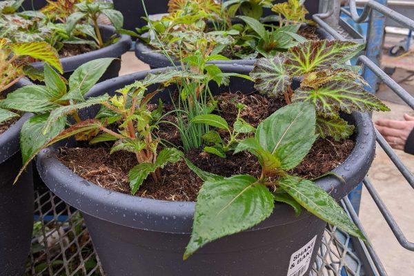 Combo pot freshly planted.
