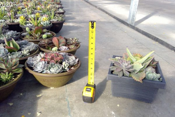 Succulent Bowls Round and Square