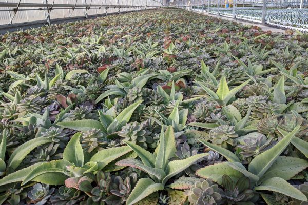 Square Succulent Bowls